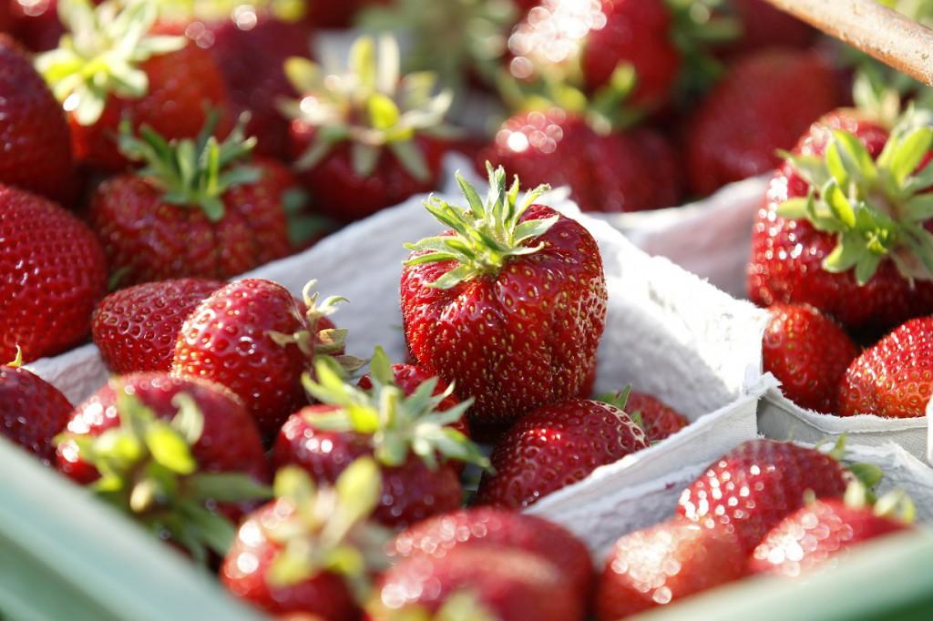 LECKER! BIOLAND-Erdbeeren!